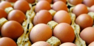Salmonella, ministero della Salute richiama molti lotti di uova fresche.