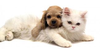 Se il regalo per Natale è un cucciolo? I consigli per prepararsi ad accoglierlo.